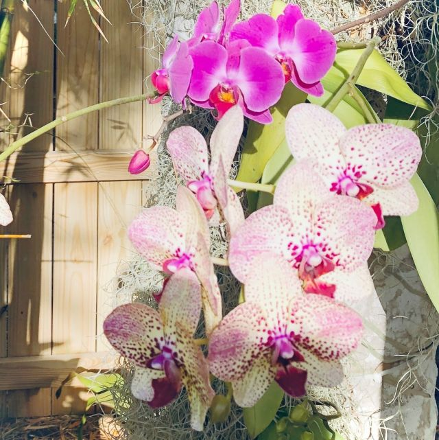 Happy Easter from our tropical paradise ...⠀⠀⠀⠀⠀⠀⠀⠀⠀ ⠀⠀⠀⠀⠀⠀⠀⠀⠀ #easter⠀⠀⠀⠀⠀⠀⠀⠀⠀ #eastersunday⠀⠀⠀⠀⠀⠀⠀⠀⠀ #hope⠀⠀⠀⠀⠀⠀⠀⠀⠀ #renewal⠀⠀⠀⠀⠀⠀⠀⠀⠀ #chichiluna⠀⠀⠀⠀⠀⠀⠀⠀⠀ #pink⠀⠀⠀⠀⠀⠀⠀⠀⠀ #purple⠀⠀⠀⠀⠀⠀⠀⠀⠀ #blooms⠀⠀⠀⠀⠀⠀⠀⠀⠀ #naturesart⠀⠀⠀⠀⠀⠀⠀⠀⠀ #inspiration
